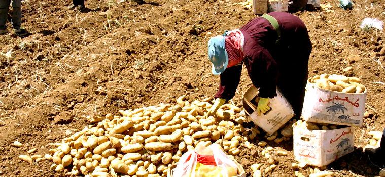 Sviluppo agricolo