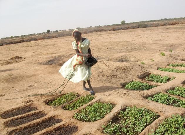 Pozzi e orti comunitari