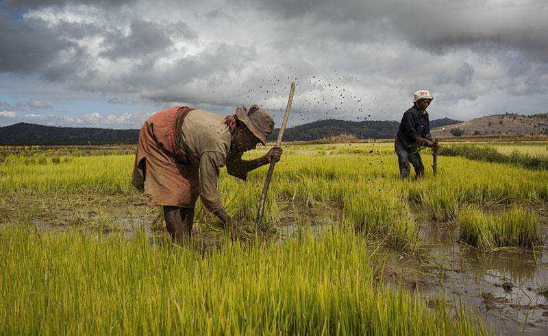 Corsi per i contadini malgasci
