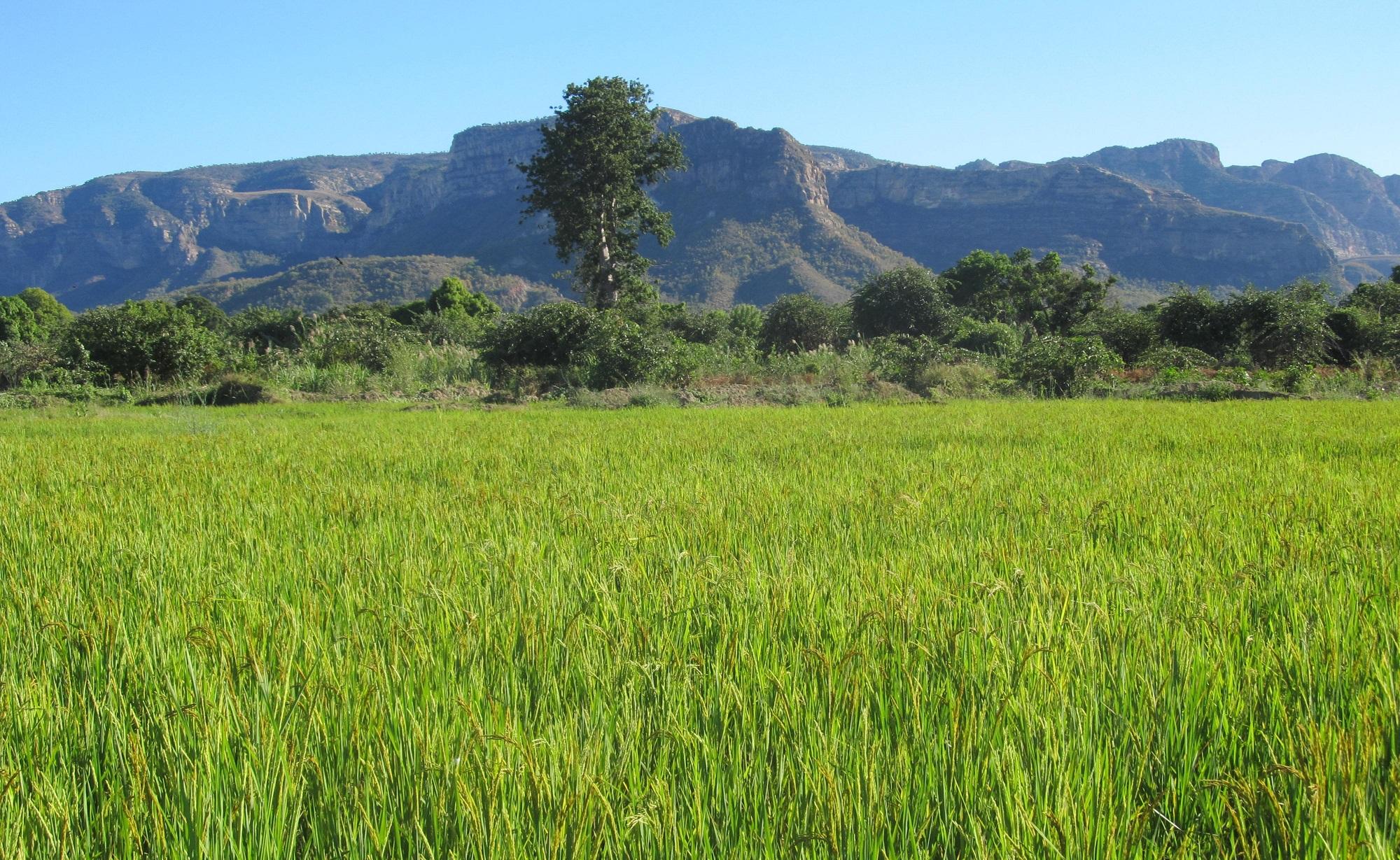 Formazione agricola e ambientale a Benenitra