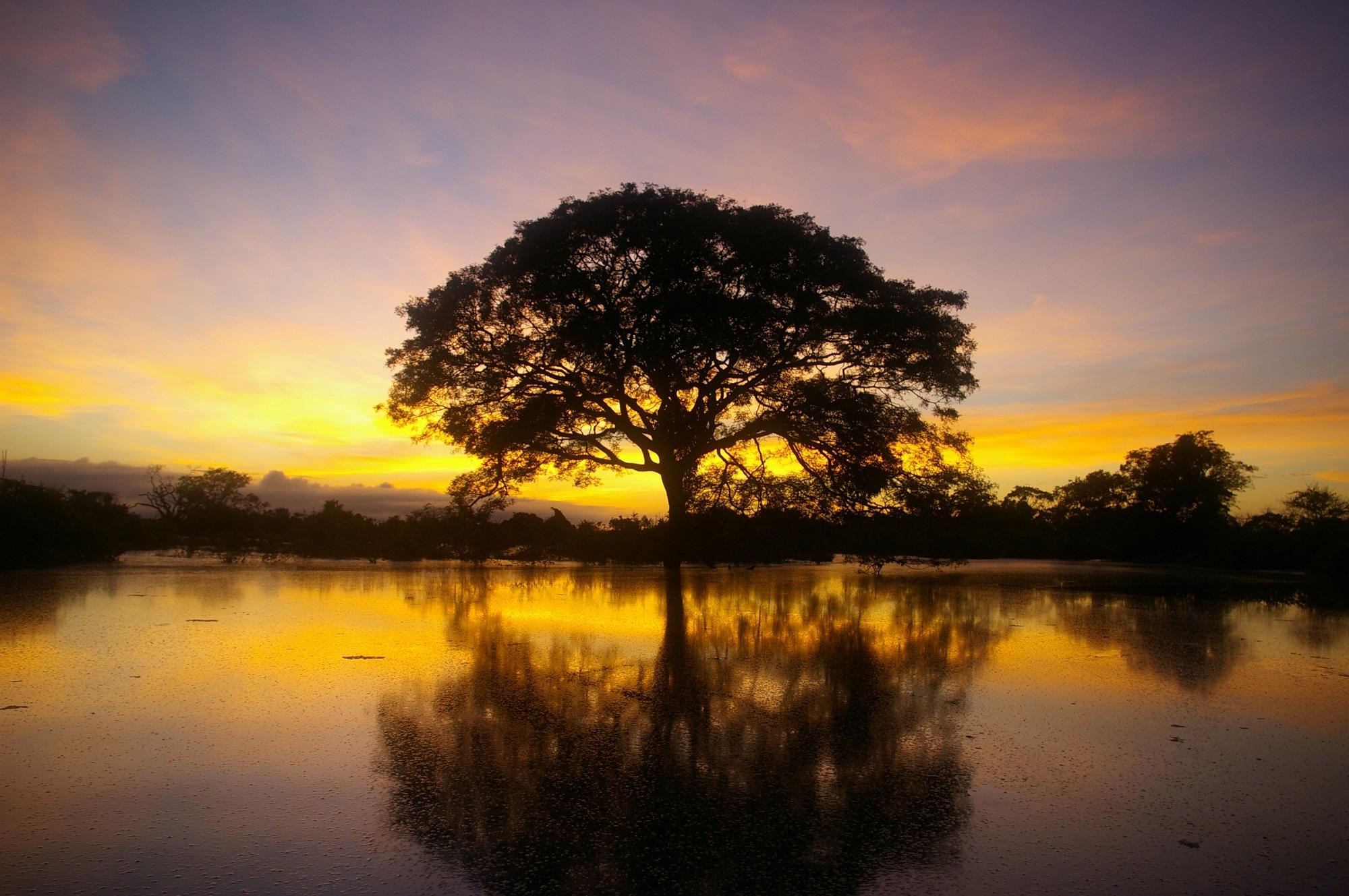 Amazzonia: «Queste sono le cose che puoi imparare da noi»
