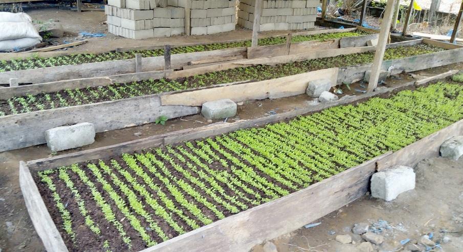 Formazione agricola per l'occupazione dei giovani