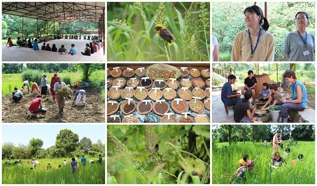 Cura della Casa comune e agricoltura ecologica