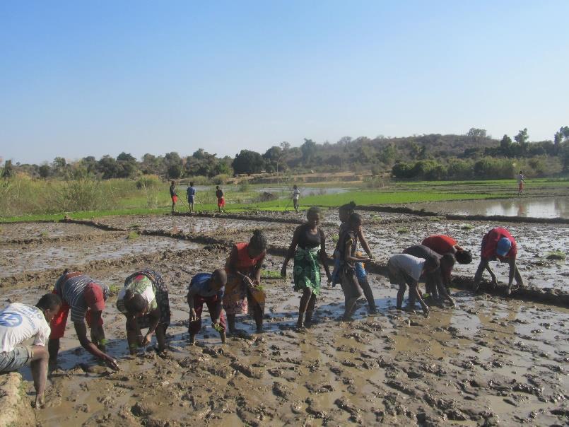 Formazione agricola e sostegno tecnico: si conclude con successo il progetto a Benenitra
